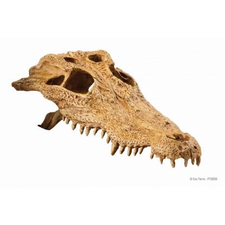 Exo Terra krokodília lebka
