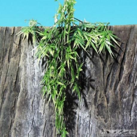 JBL TerraPlanta Madagascar Bambus L39