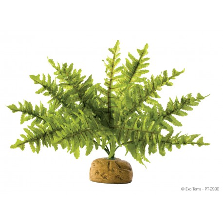 Exo Terra Boston Fern malý