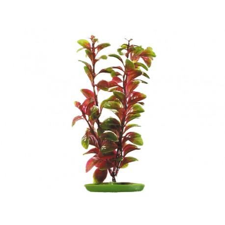 LIVING WORLD Red Ludwigia 30 cm