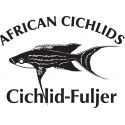 Cyprichromis zonatus Mvuna Island