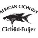 Julidochromis ornatus Kasanga