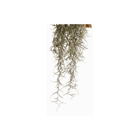 Exo Terra Spanish Moss stredná