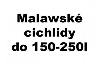 Malawské cichlidy do 150-250l akvária