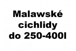 Malawské cichlidy do 250-400l akvária
