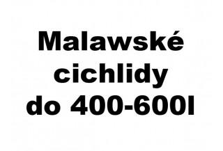 Malawské cichlidy do 400-600l akvária