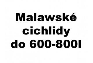 Malawské cichlidy do 600-800l akvária