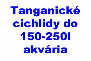 Tanganické cichlidy do 150-250l akvária