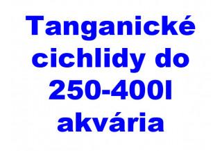 Tanganické cichlidy do 250-400l akvária