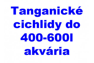 Tanganické cichlidy do 400-600l akvária