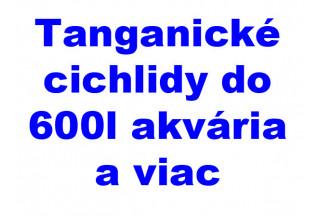 Tanganické cichlidy 600l akvária a viac