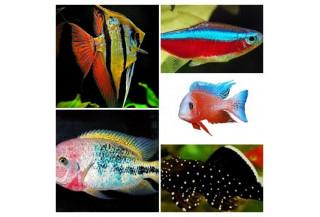 Krmivá filtrované podľa chovaných rýb /africké cichlidy, tetry, discusy, prísavníky.../