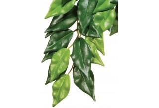 Dekoračné rastliny