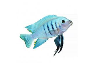 Pre ryby (vitamíny, posilnenie, rast, proti plesniam, ...)