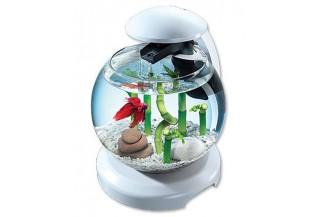 Betta akvária