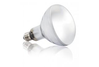 Terarijné žiarovky