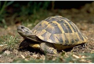 03.Pre suchozemské korytnačky