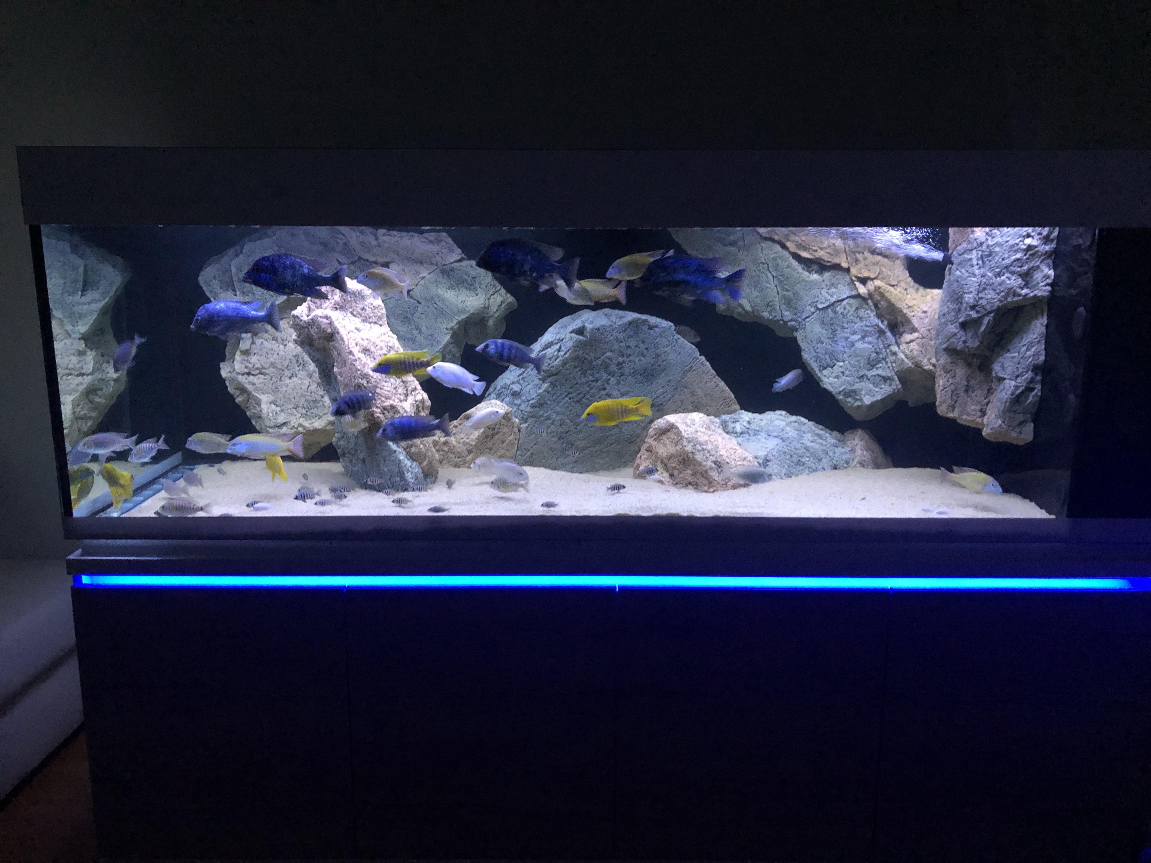 akvárium 1300 litrov